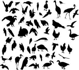fifty three bird silhouettes