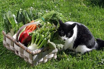 le chat et le panier de légumes