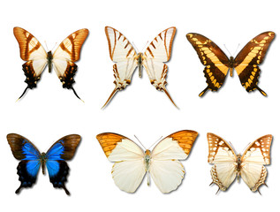 Butterflys on white background
