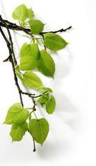 Art Spring branch