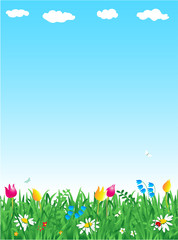 Sping grass and flowers vector background