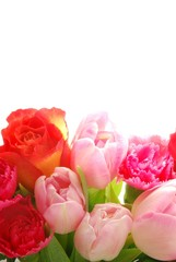 In de dag Macro Spring flowers