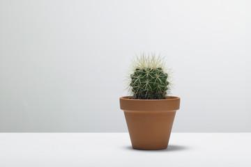 kaktus04