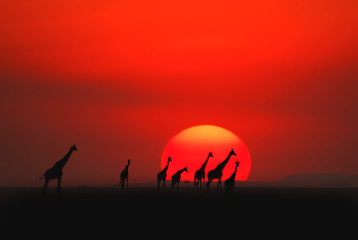 African sunset in Masai Mara, Kenya