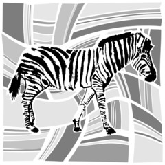 zebra design vector