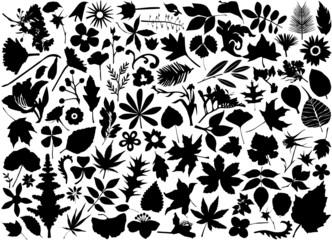 flower and leaf set vector