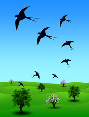 Rondini  Primavera-Spring Swallows-Irondelles  Printemps