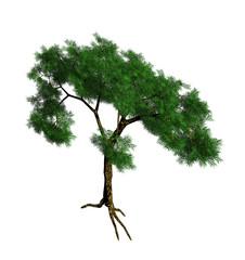 Green 3d cedar