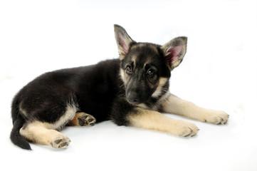 my little puppy