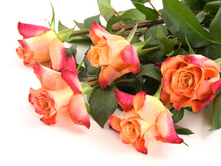 Five orange rose