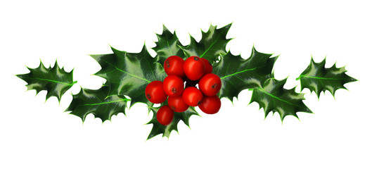 Clipping Path, Branch of Holly,  isolated on white