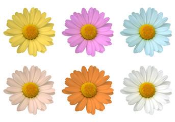Margherite di sei colori