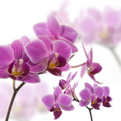 Tuinposter Orchidee Orchidee