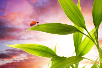 ..Ladybug sitting on a green grass
