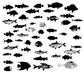 Sea animals fish silhouettes vector set