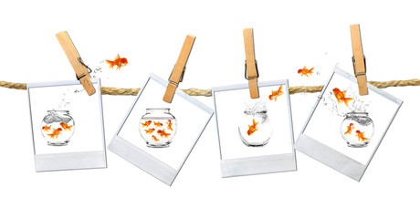 Humous Image of Goldfish Jumping Around