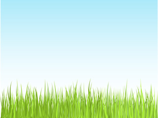 Detailed grass and sky