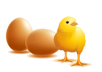 chick and eggs.