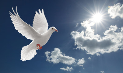 Wall Mural - dove in the sky