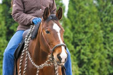 Pferd mit Bosal