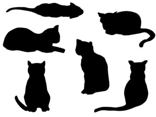 Cats outline