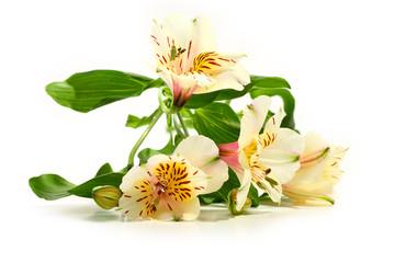 flowerrs