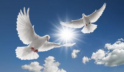 Wall Mural - two flying doves