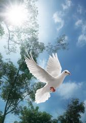 Wall Mural - white dove flying