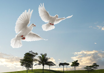 Wall Mural - two doves flying