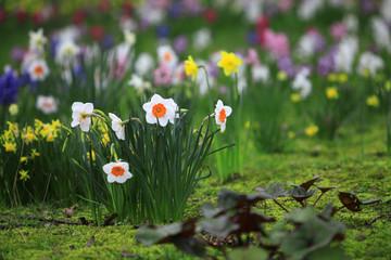 Flower Field in Spring