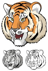 Tiger growling, head close-up, vector illustration