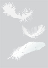 three white feathers set