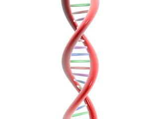 ADN - RNA