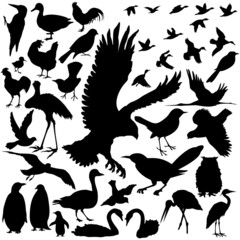 39 pieces of bird silhouettes.