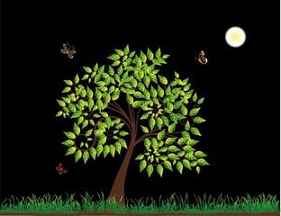 Spring Tree at Night