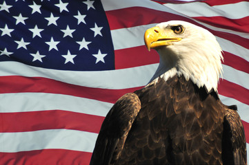 Deurstickers Eagle Bald Eagle and USA flag