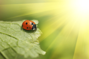 Sticker - Ladybug on green leaf
