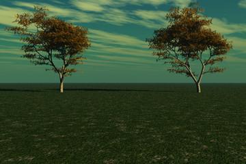 Majestic Maple Trees