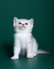 Kitten on a green backgrounds.