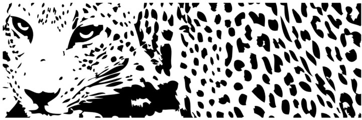 Obraz leopard - fototapety do salonu