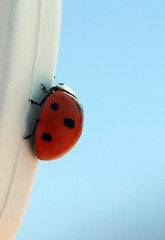 ladybird on the sky background