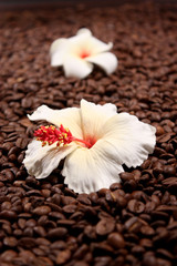 Kaffee und Blume
