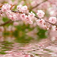 Spring flowers reflected in the water