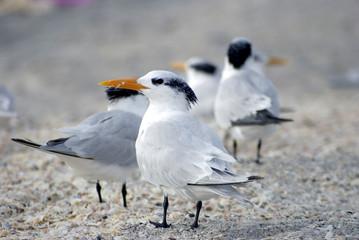 Vögel, Sevögel