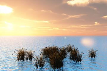 Fototapeta Reeds and Sea