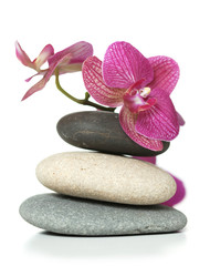 Orchid laying on stones
