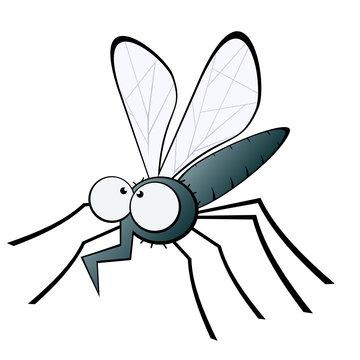 mücke moskito fliege
