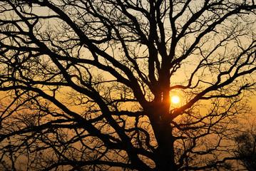 Pianta al tramonto