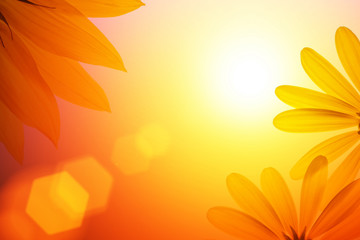 Wall Mural - Sunshine background with sunflower details