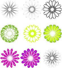 Blüten Vektor